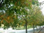 fotografia,autunno,foto autunnali,periferia,passeggiata,ricerca,città,foglie,sole,ricordi