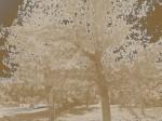 folgorazioni,cielo,vento,alberi,legno,caldarroste,poesia dell'attimo,lacrime,contemplazione,silenzio