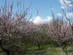 Febbraio,Marzo,primavera,quaresima,natura,fiori,