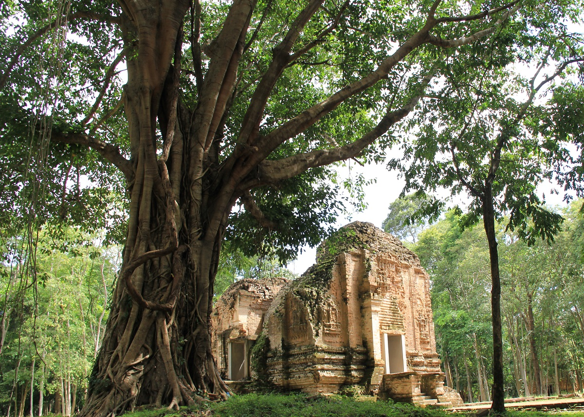 Cambogia (582)